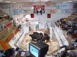 Sale Barns In Nebraska Beef State Bassett Livestock Auction Netnebraska Org