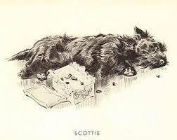 1099 2 scotties images scottish terriers