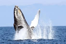 farallon islands whale watching from san francisco oceanic society
