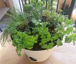 Herb Container Garden - one pot seven herbs organic gardening on the wildside