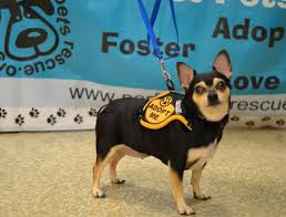 dogs perfect pets rescue inc