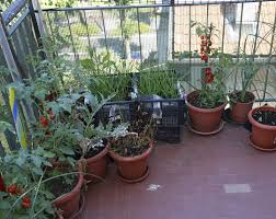 Vegetable Garden Containers by Best Apartment Balcony Vegetable Garden Ideas Home Design 2017