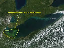 harmful algae bloom now starting to form in lake erie mlive com