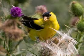 bird gardens flowers and plants to attract wildlife proflowers