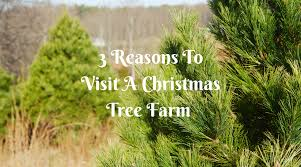 3 reasons to visit a christmas tree farm theresa u0027s reviews