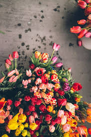 Spring Flower Pictures 158 Best Spring Images On Pinterest Flowers Fresh Flowers And