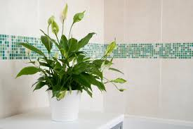 best indoor house plant a perfect list of the best indoor plants make the right choice
