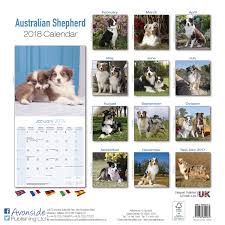 buy a australian shepherd australian shepherd calendar 2018 10009 18 dog breeds