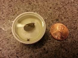 i found this tick sonofabitch rolling around on my floor too fat