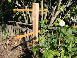 raspberry trellis grow food not lawns gardening tips and ideas