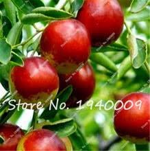 fresh dates fruit popular fresh dates fruit buy cheap fresh dates fruit lots from