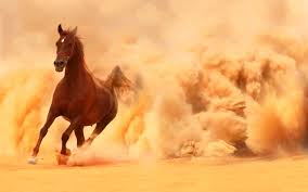 mustang horse running arabian horse running out of the desert storm wallpapers