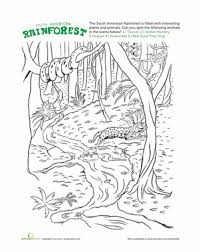 rainforest printable worksheets free worksheets library download