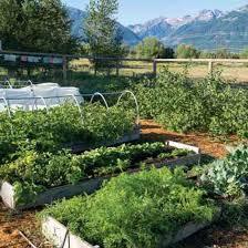 gardening tips year round gardening tips for your region organic gardening
