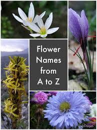 list of flower names hubpages