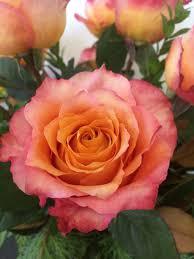 albuquerque florist albuquerque florist reviews aspire floral
