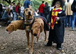 Halloween Costumes Dogs Cutest Puppy Costumes 2011 21 Clever Dog Halloween Costumes Nyc U0027s Halloween Dog Parade