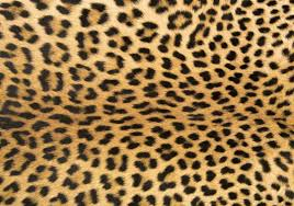 Animal Print Home Decor by Foflor Animal Print Area Rugs Unique Doormats Leopard Rug Doormat