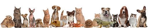 Pet Pet U0026 Plant Care Chicago