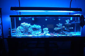 Aquarium Aquascapes Let U0027s See Those 125 Gallon Aquascapes Reef Central Online