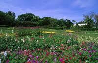 Bermuda Botanical Gardens Bermuda S Gardens