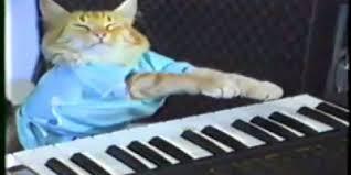 Keyboard Cat Meme - rest in peace beloved internet icon keyboard cat indie88