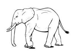 elephant coloring pages coloring4free