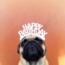 Pug Birthday Meme - one man and his pug photographer takes series of hilarious shots of