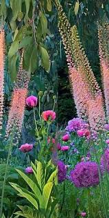 lupine allium garden pinterest allium gardens and flowers