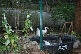 show me you goose pen need ideas page 2 backyard chickens