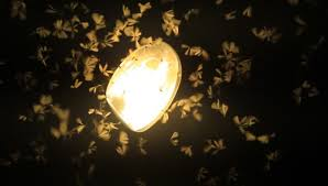 light bulb that doesn t attract bugs why are bugs attracted to light betuwannaknow