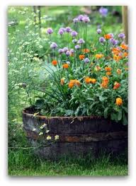 Herb Container Garden - herb container gardens indoors or outdoors