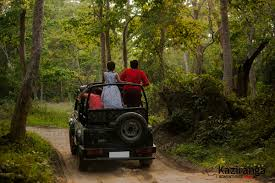 hatari jeep kaziranga elephant safari pricing and online booking