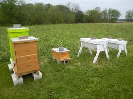 top bar hives vs langstroth hives findlaybee