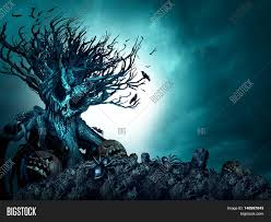 halloween skull pumpkin background halloween creepy background haunted ghost tree at night as an old
