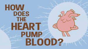 how the heart actually pumps blood edmond hui youtube