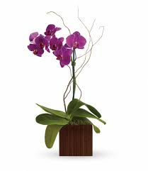 purple orchids purple orchid planter purple orchid plant in clear lake tx