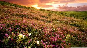 Flowers Anza Borrego Sunrise Anza Borrego State Park Ca 4k Hd Desktop Wallpaper For