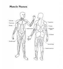 muscle diagram to label u2013 hd m com