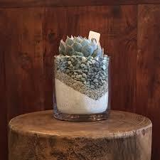 Vase Rocks Succulent In A Cylinder Vase With White Sand U0026 Grey Rocks