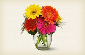 gerbera colors gerbera daisies flowers michigan florists flower delivery