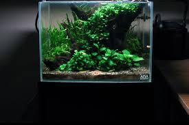Beginners How To Grow Just by 23 Easy To Grow U0026 Low Light Plants For Your Aquarium Aquatic Mag
