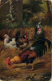 156 best chicken images on pinterest roosters rooster art and