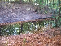 Wehr Baden Neues Wehr Im Polzowkanal Bei Dietrichsbrück Naturpark Stechlin