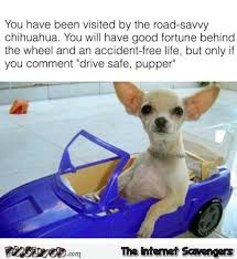 Funny Chihuahua Memes - you have been visited by the road savvy chihuahua funny meme pmslweb