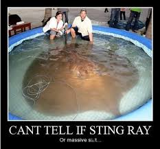 Stingray Meme - memebase dog poop all your memes in our base funny memes