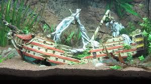 aquarium mit schiffswrack und buntbarschen fish tank with