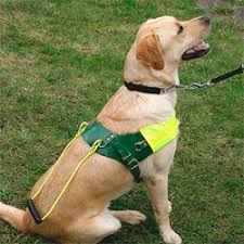 Dogs Helping Blind People The Seeing Dogs Alliance The Big Give
