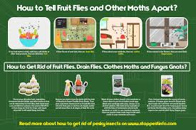 how to get rid of fruit flies best traps that work