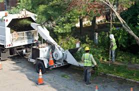 cheap tree cutting service in escondido